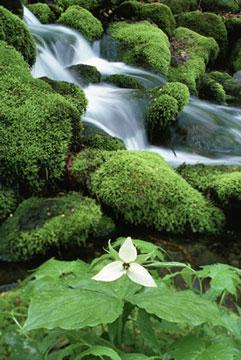 Bosque Profundo de Chile