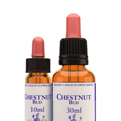 Chestnut bud: Brote de castaño - Flor de Bach (30 ml.)