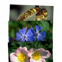 Juego de 40 tarjetas postales de Flores de Bach