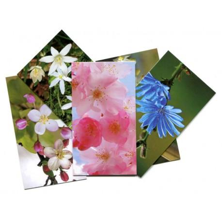 Tarjetas de Flores de Bach