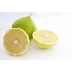Bergamota - Aceite esencial para aromaterapia