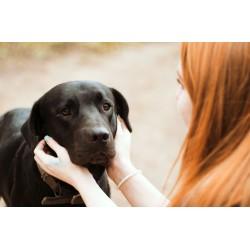 Miedos - Combinación para Animales FSG