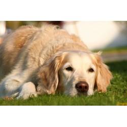 Carencia / Depresión - Combinación para Animales FSG