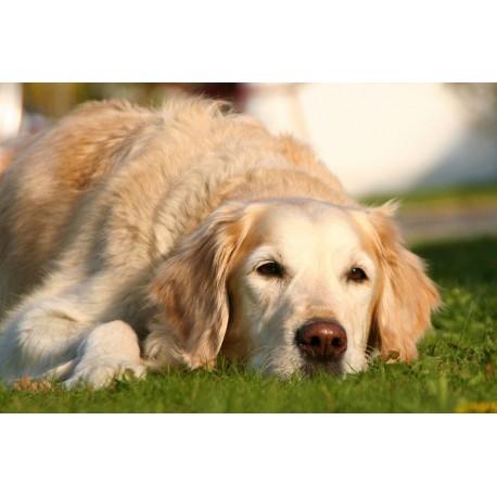 Combinación para Animales 3FSG - Carencia / Depresión