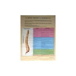 Sistema Nervioso y Quiropráctica - Poster