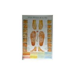 Reflexología de los pies - Poster