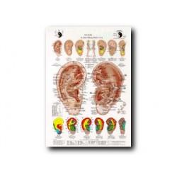 Auriculoterapia - Carta - Referencia de estudio