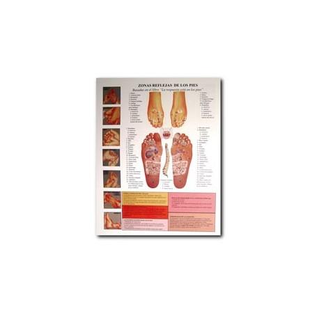 Reflexología de los pies - Carta - Referencia de bolsillo