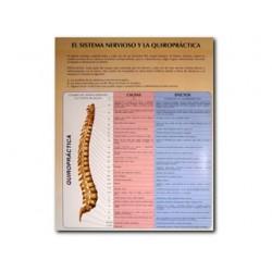 Sistema nervioso y quiropráctica - Carta - Referencia de bolsill