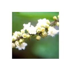 Boa Sorte - Buena suerte - Esencia floral de Saint Germain